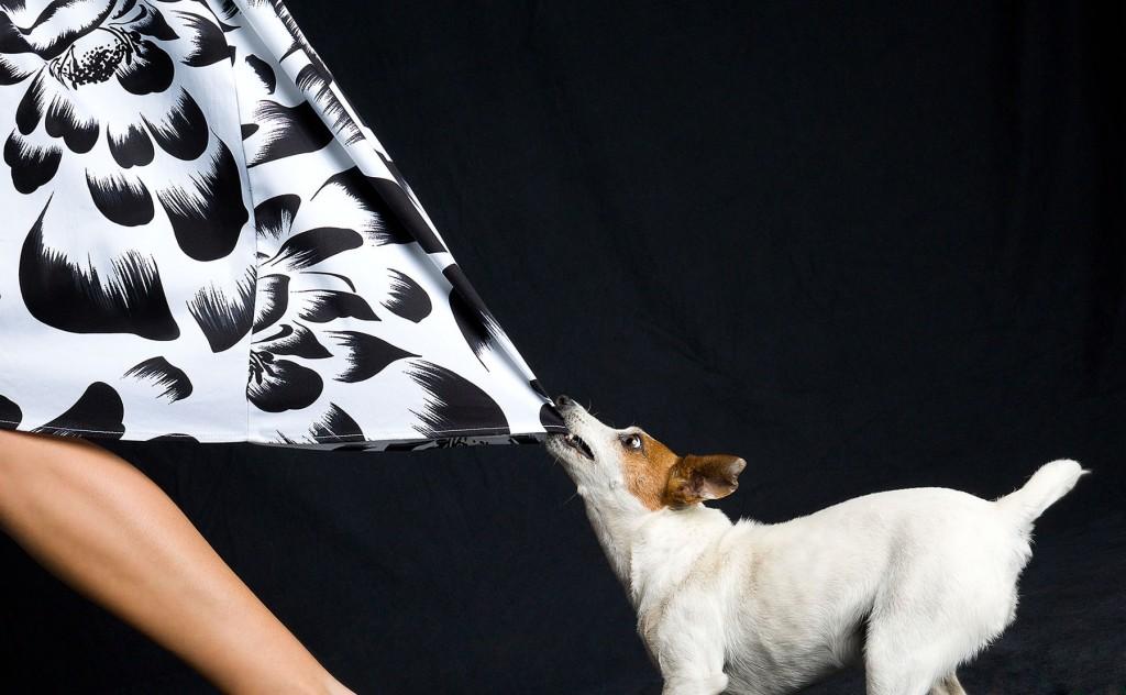 dog holding back of womens dress